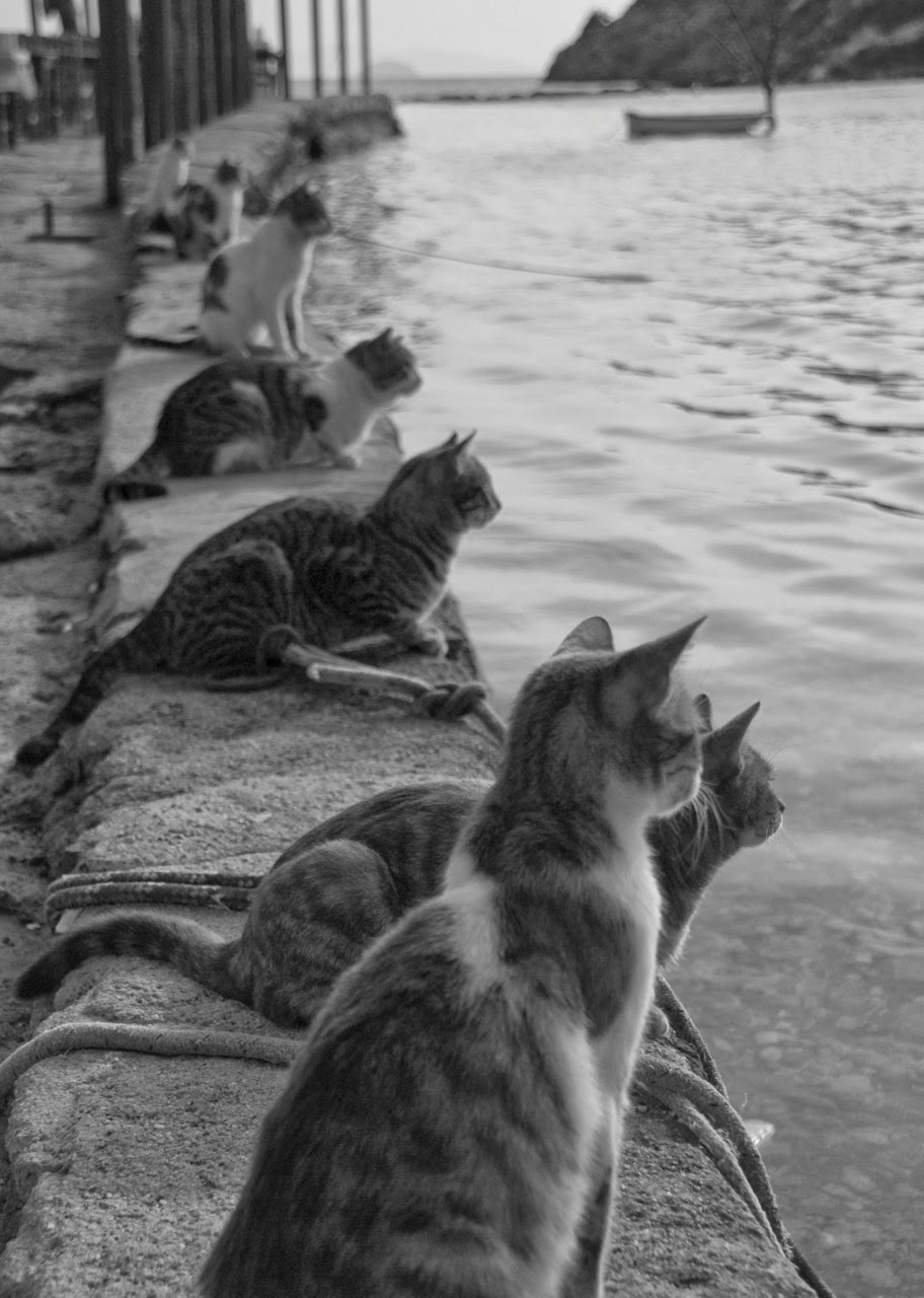 Cats Waiting for Fishermen to Return
