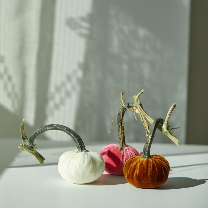 Small Velvet Pumpkin, Ivory image