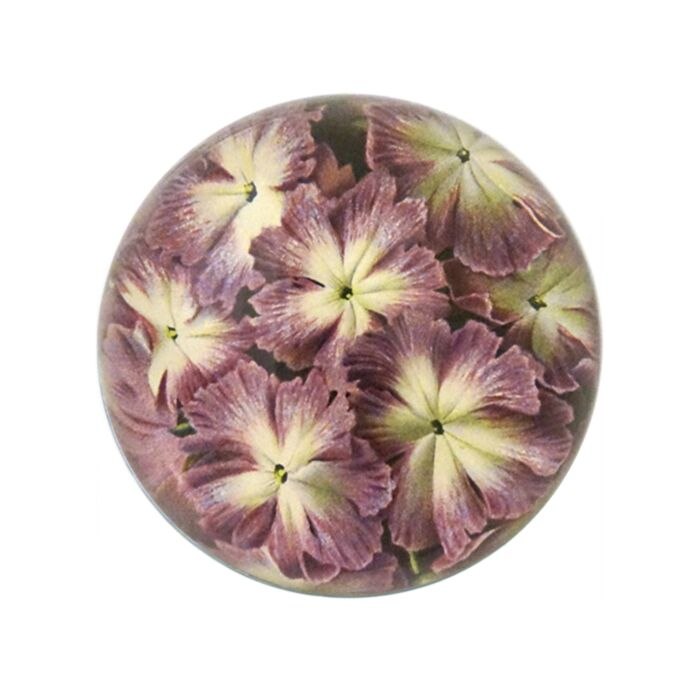 Primula Cortusoides Dome Paperweight