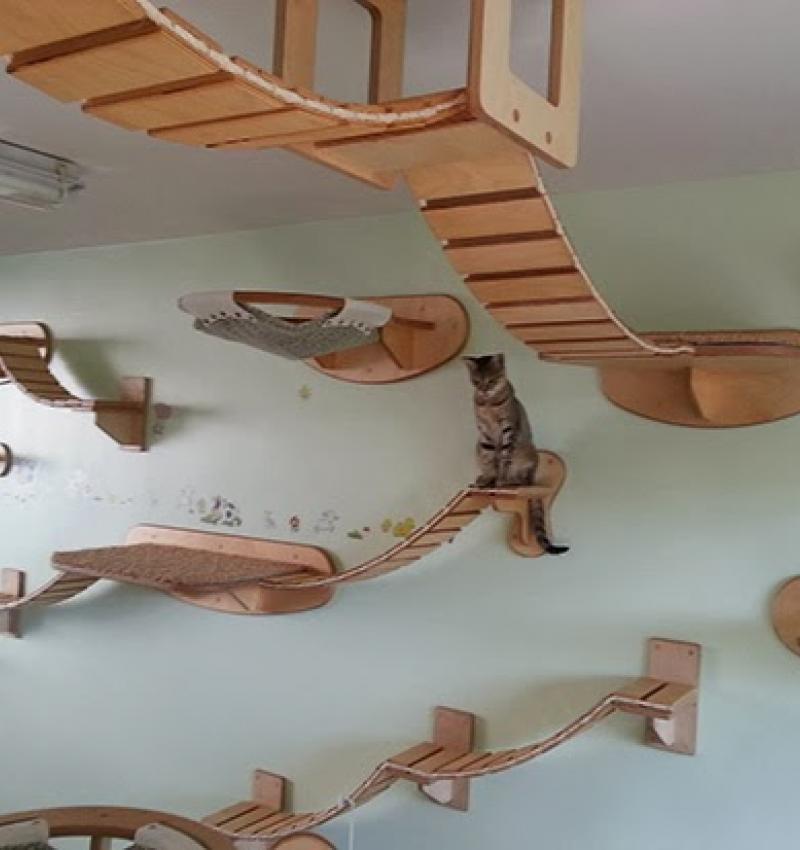 Kitten Castles