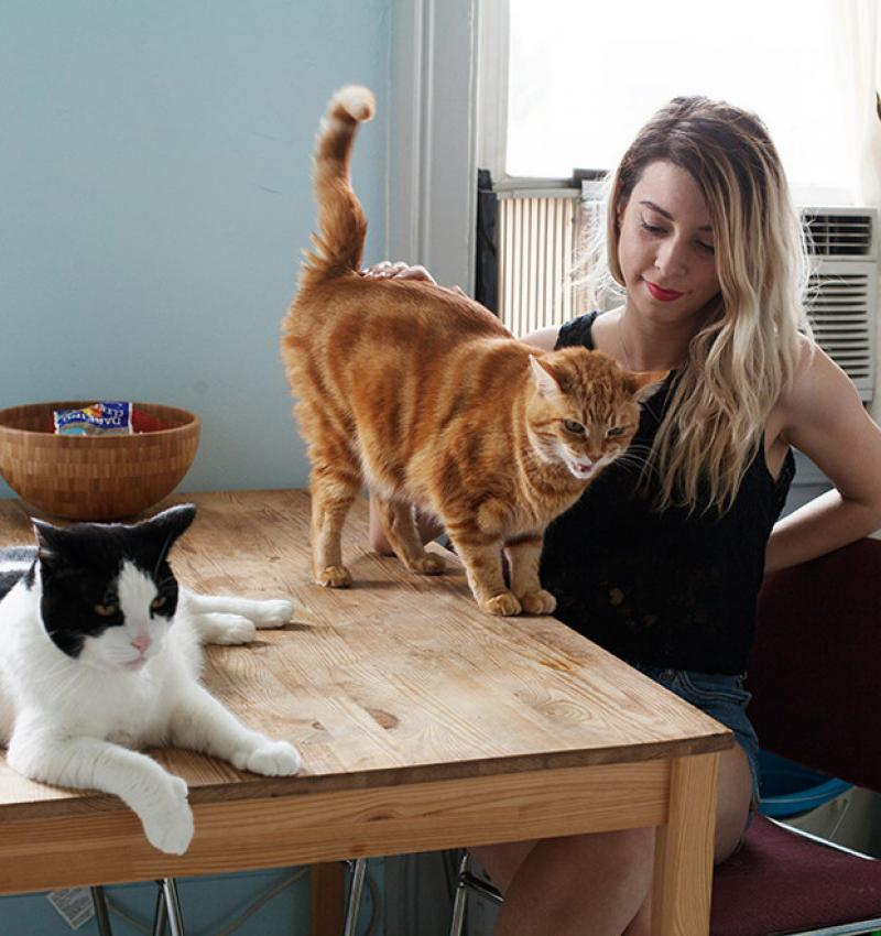 Kittens and kittens.